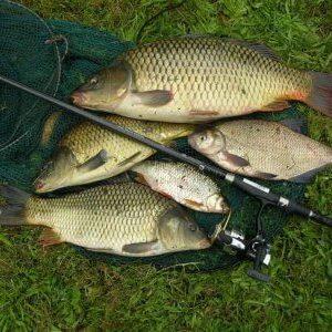 Városi horgászverseny.
